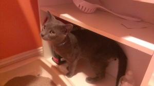 gray cat on shelf