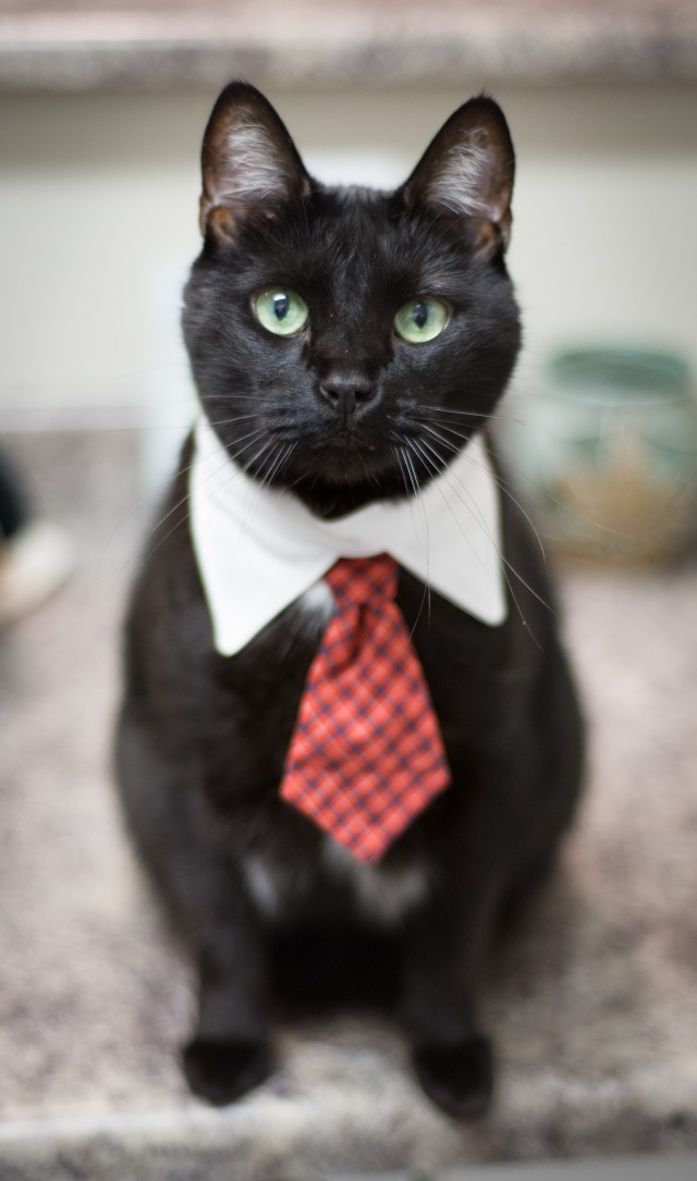 image of cat wearing tie
