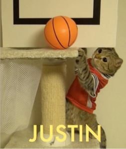 Image of cat playing basketball