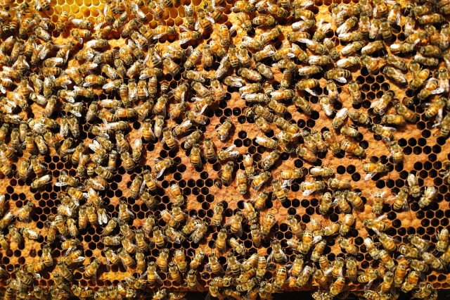 bees-809328_1920