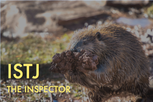 Beaver holding a collection of sticks with the text: INTJ The Inspector