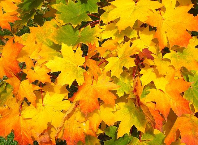 leaves-57427_640
